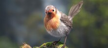 Beautiful Chubby Bird Sitting ...