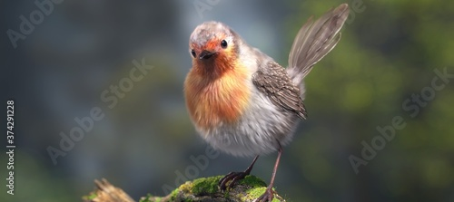 Beautiful chubby Bird sitting on tree branch in forest, Closeup view