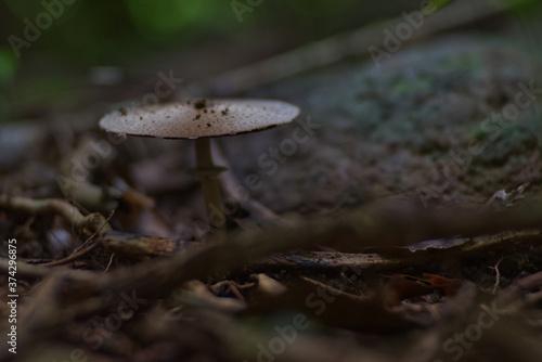 Umbrella like mushroom on ground with blur background Wallpaper Mural
