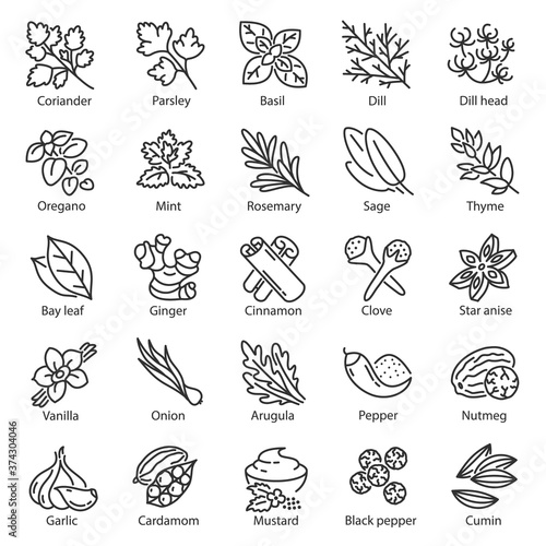 Fototapeta Spice icon set. Kitchen herbs, linear icons. Condiment. ginger, rosemary, sage, thyme, mint, onion, basil, arugula, nutmeg, mustard, vanilla etc, Line with editable stroke obraz