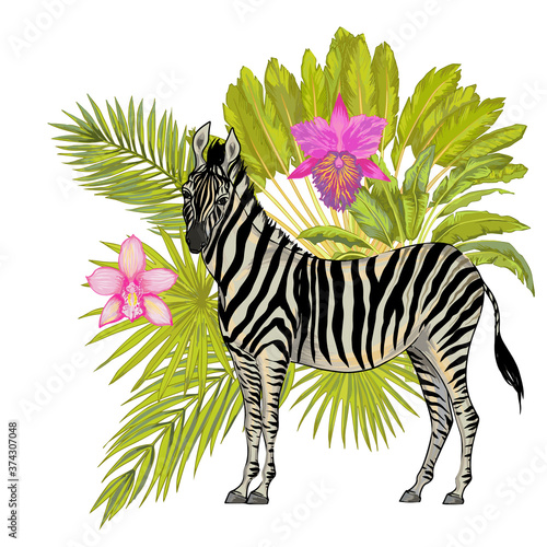 Leinwand Poster Vector with watercolor effect cute realistic illustration of zebra with tropical