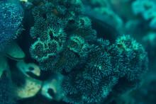 Texture Of The Sea Anemone Mac...