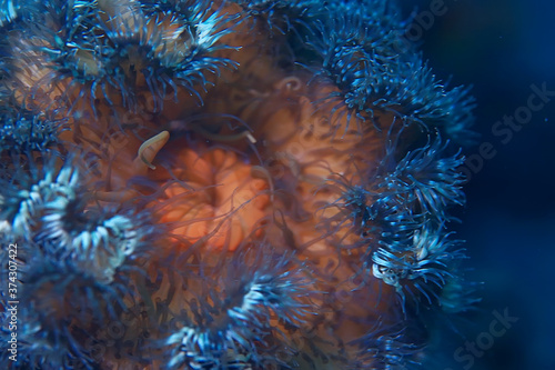 Obraz na plátně texture of the sea anemone macro tentacles corals