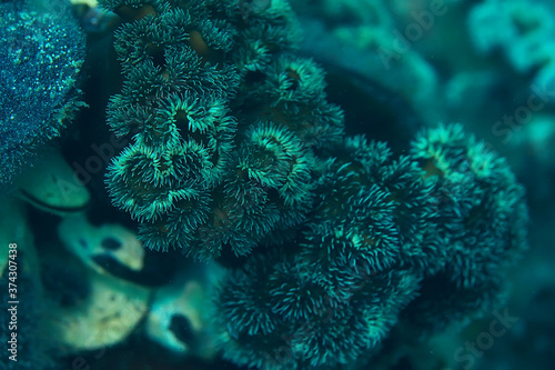 Photo texture of the sea anemone macro tentacles corals