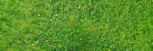 Green Grass Top View, Abstract...