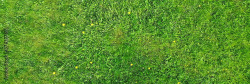 Photographie green grass top view, abstract nature field background