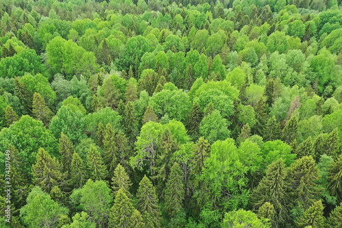 Obraz na plátně forest top view, landscape panorama view of summer forest with quadrocopter aeri