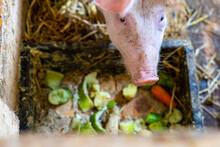 Kleines Hungriges Schwein übe...