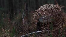 Fougère Donnant L'illusion D'envelopper Une Souche D'arbre, Dans Une Ambiance Morte Et Macabre
