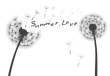 Vector Dandelion And Flying Seeds. Outline Illustration.