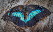 Butterfly On A Wooden Wall