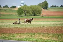 Amish Field Work, Cutting Hay
