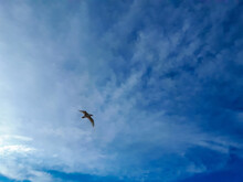 Shot Of A Flying Seagull On Th...