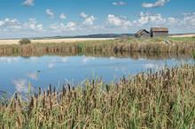 Old Farm Buildings Beside A Pond On The Prairie Near The Town Of Trochu, Alberta, Canada