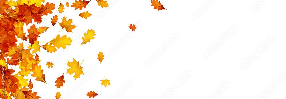 Fototapeta Autumn gold oak and maple leaves.