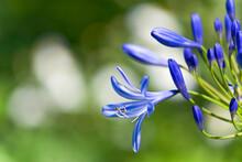 Beautiful Blue Flowers In The Garden