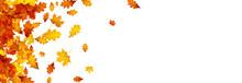 Autumn Gold Oak And Maple Leav...