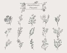 Wildflowers Floral Set Hand Drawn Sketches
