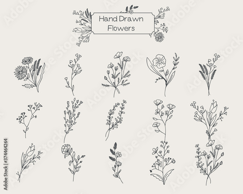 Fototapeta Wildflowers Floral Set Hand drawn Sketches