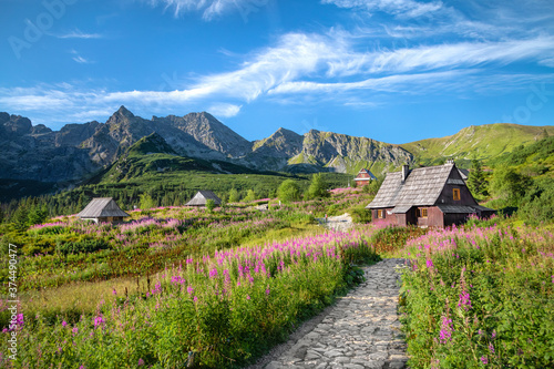 Fototapety, obrazy: Flowering Chamaenerion in Gasienicowa Valley, Tatra Mountains, Poland