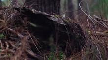 Souche D'arbre Creuse Envahie Par Les Fougères Et D'autres Plantes