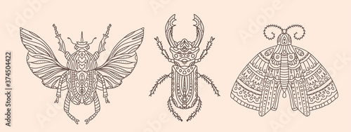 Fotografie, Obraz Set of vector illustrations with insects