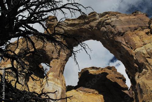 Fotografie, Obraz Utah- Close Up of Bare Tree and Shadows at Grosvenor Arch