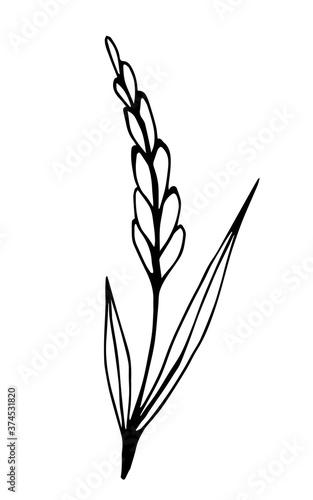 Fotografia Hand-drawn simple vector illustration in black outline