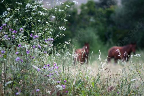 Caballos tras las flores Canvas Print