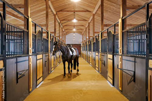 Fototapeta In the stable with horse in a equestrian center obraz