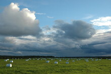 Storm Clouds Over Field With White Bales Of Hay. The Republic Of Komi, Russia