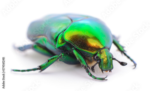 Valokuvatapetti Green beetle isolated.
