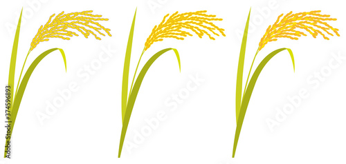 Fotomural Rice plant against white background