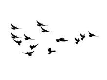 Silhouette Flock Of Flying Bir...