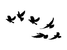 Silhouette Flock Of Flying Bir...