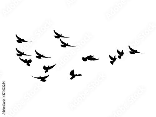 Obraz silhouette Flock of Flying Birds. flying birds on white background. vector illustration - fototapety do salonu