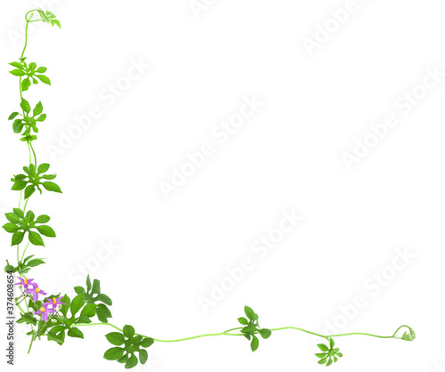 Fotomural green ivy to do background image.