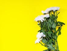 White Chrysanthemum On Yellow ...