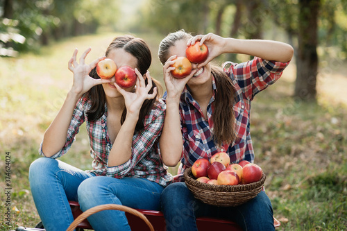 Fotografija Two teenage girls picking ripe organic apples on farm at fall day