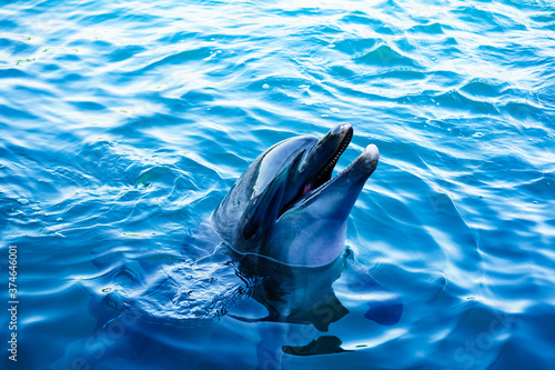 Photographie dolphin in blue water
