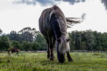 Beautful Little Pony