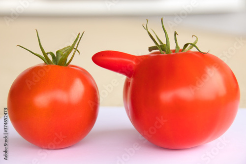 a normal and a deformed red tomato on a table Wallpaper Mural