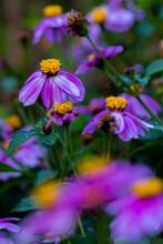 Little Purple Droopy Flowers W...