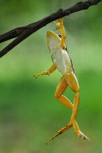 A Frog Hanging From A Tree Branch