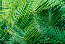 Palm Leaves Green Background