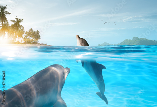 Fototapeta view of nice bottle nose dolphin  swimming in blue crystal water