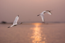 One After Another .....Flight ...