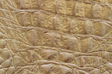 Texture Of Genuine Leather Close-up, Khaki, Embossed Under The Skin Of Reptile, Croco. Trendy Pattern