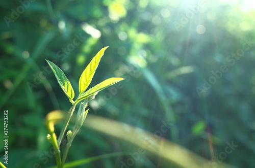 Obraz na plátně 植物
