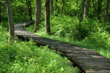 Early Summer Wooden Road With ...